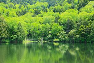 志賀高原 長池の新緑の写真素材 [FYI02083017]