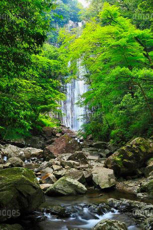 矢研の滝の写真素材 [FYI02083145]
