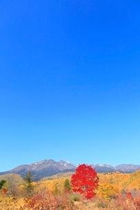 乗鞍高原の紅葉と乗鞍岳の写真素材 [FYI02083173]