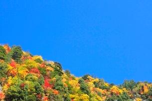 紅葉と青空の写真素材 [FYI02083175]