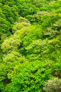 飯田高原の新緑の写真素材 [FYI02083186]
