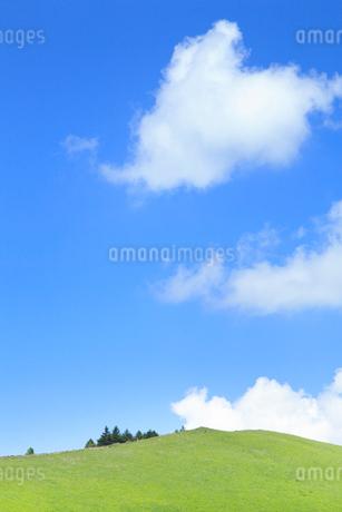 草原と緑樹の写真素材 [FYI02083222]