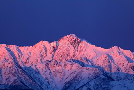 北アルプス五竜岳 冬の朝焼けの写真素材 [FYI02083524]