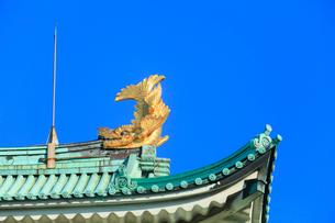名古屋城・金鯱の写真素材 [FYI02083691]