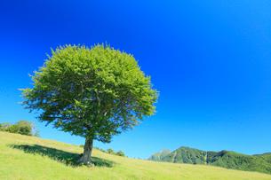 1本の緑樹の写真素材 [FYI02083771]