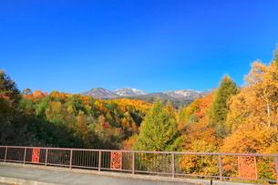 乗鞍高原から望む紅葉の乗鞍岳の写真素材 [FYI02083820]