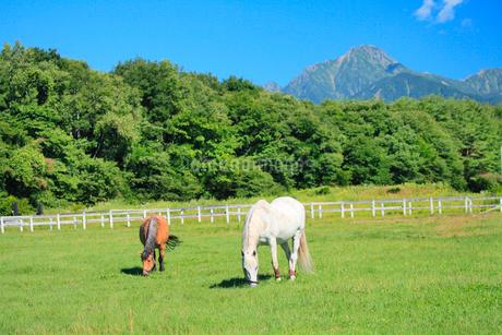 清里高原 馬と牧場の写真素材 [FYI02083828]