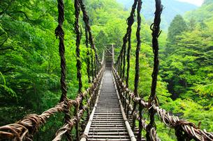 新緑の奥祖谷かずら橋の写真素材 [FYI02083899]