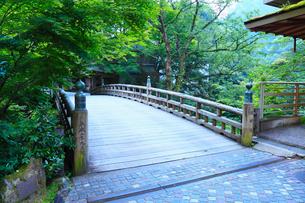 山中温泉・こおろぎ橋と新緑の写真素材 [FYI02083981]