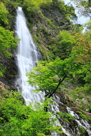 新緑と天滝の写真素材 [FYI02083982]