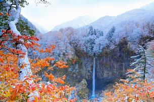 雪化粧した紅葉と白水滝の写真素材 [FYI02084094]