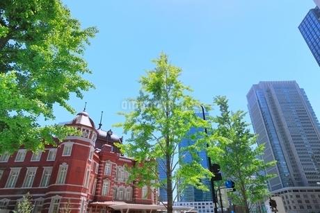 東京駅と新緑の写真素材 [FYI02084166]