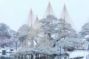 雪化粧の兼六園の写真素材 [FYI02084223]