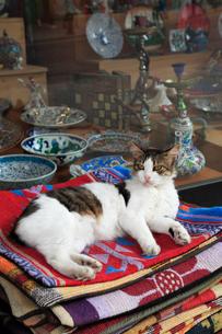 イスタンブール名物の野良猫の写真素材 [FYI02084244]