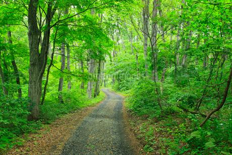 新緑の雑木林と道の写真素材 [FYI02084400]