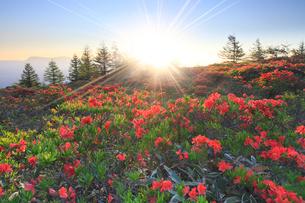 鉢伏山 レンゲツツジと朝日の写真素材 [FYI02084421]