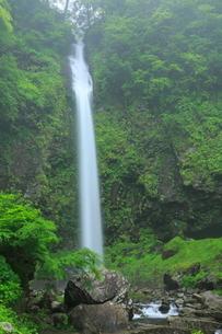 阿弥陀ヶ滝と新緑の写真素材 [FYI02084457]