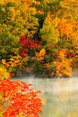 地獄沼と紅葉の写真素材 [FYI02084470]