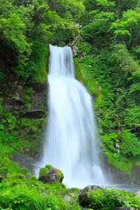 開田高原 尾ノ島の滝と新緑の写真素材 [FYI02084499]