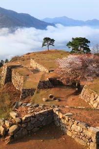 ヤマザクラ咲く竹田城跡と雲海の写真素材 [FYI02084531]