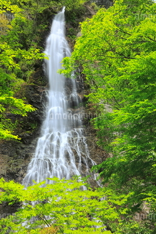 新緑と天滝の写真素材 [FYI02084541]