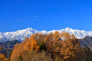 カラマツ紅葉と北アルプス(鹿島槍ヶ岳・五竜岳)の写真素材 [FYI02084633]