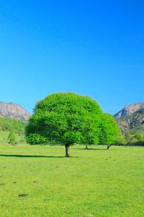 新緑の樹と草原の写真素材 [FYI02084640]