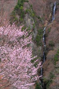 松川渓谷・八滝とサクラの写真素材 [FYI02084689]