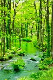 裏磐梯 長瀬川と新緑の写真素材 [FYI02084826]