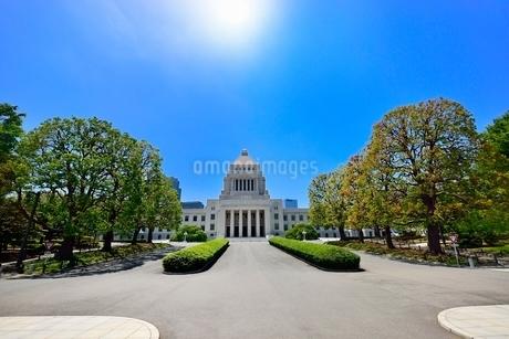 国会議事堂と正面並木に太陽の写真素材 [FYI02084857]
