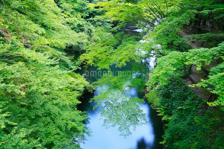 山中温泉・こおろぎ橋から望む新緑の鶴仙渓の写真素材 [FYI02084875]