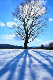 雪原の木と太陽の写真素材 [FYI02084921]