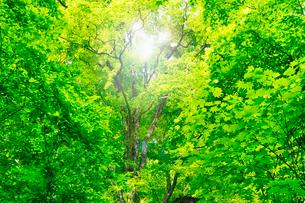 新緑と光の写真素材 [FYI02084935]