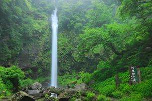 阿弥陀ヶ滝と新緑の写真素材 [FYI02084988]