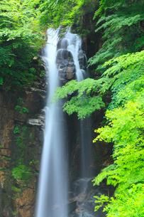 新緑の小野の滝の写真素材 [FYI02085103]