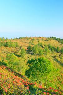 鉢伏山 レンゲツツジと緑樹の写真素材 [FYI02085129]