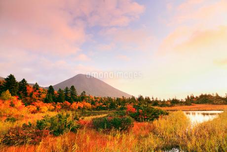 睡蓮沼と紅葉 八甲田山の写真素材 [FYI02085142]