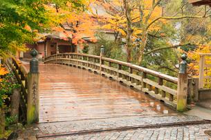 山中温泉・こおろぎ橋と紅葉の写真素材 [FYI02085164]
