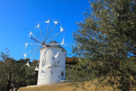 小豆島オリーブ公園 オリーブとギリシャ風車の写真素材 [FYI02085167]