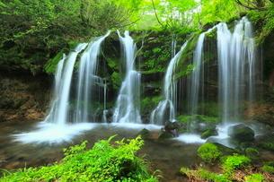 猿壺の滝と新緑の写真素材 [FYI02085227]
