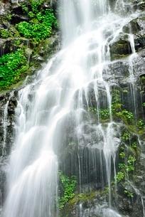 吾妻山地 新緑の幕滝の写真素材 [FYI02085262]