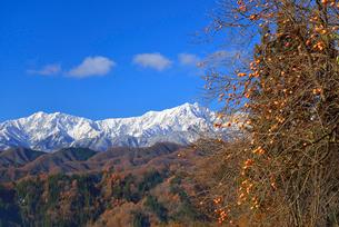 柿と北アルプス(爺ガ岳・鹿島槍ヶ岳)の写真素材 [FYI02085449]