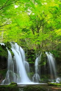 猿壺の滝と新緑の写真素材 [FYI02085475]