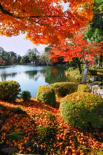 紅葉の兼六園の写真素材 [FYI02085477]