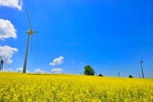 布引高原 菜の花畑と風車群の写真素材 [FYI02085491]