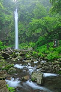 阿弥陀ヶ滝と新緑の写真素材 [FYI02085545]