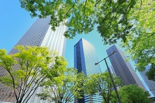 新宿副都心のビル群と新緑の写真素材 [FYI02085564]