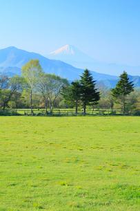 富士山と高原の新緑の写真素材 [FYI02085586]