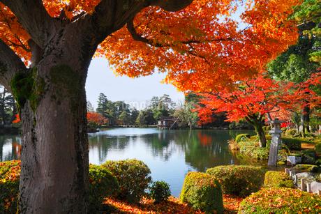 紅葉の兼六園の写真素材 [FYI02085597]
