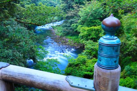 山中温泉・こおろぎ橋から望む新緑の鶴仙渓の写真素材 [FYI02085616]